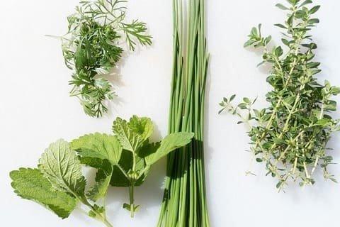 エコな家庭菜園のアイデア