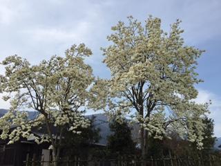 f:id:mijinyamatanishi:20160406221625j:image