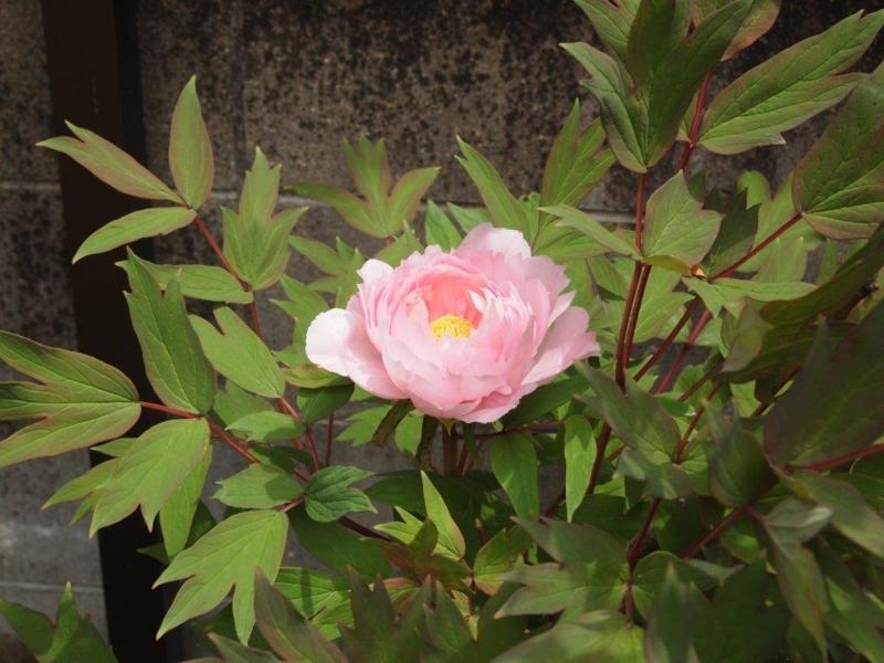 f:id:mijinyamatanishi:20160429233000j:image