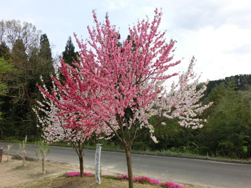 f:id:mijinyamatanishi:20170426000704j:image