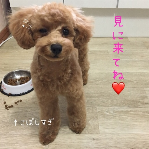 f:id:mijyukorea:20190520174332j:image