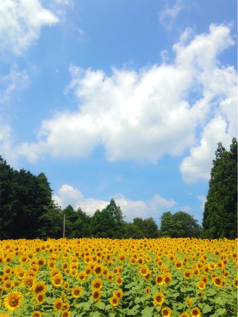 f:id:mika-shimosawa:20160814170526j:image