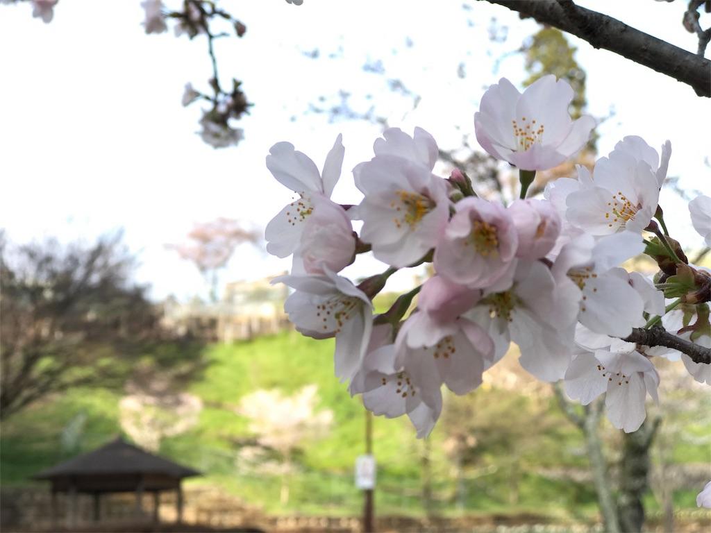 f:id:mika-shimosawa:20170409215100j:image