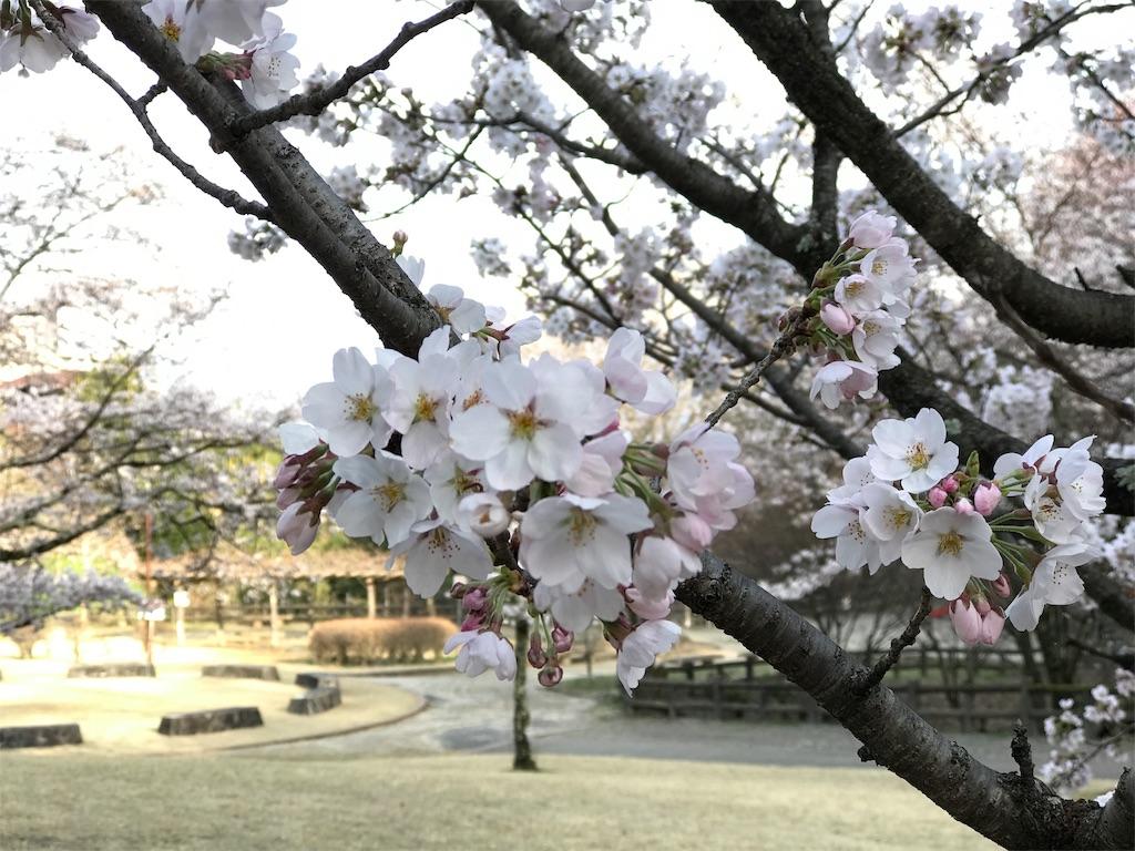 f:id:mika-shimosawa:20170409215117j:image