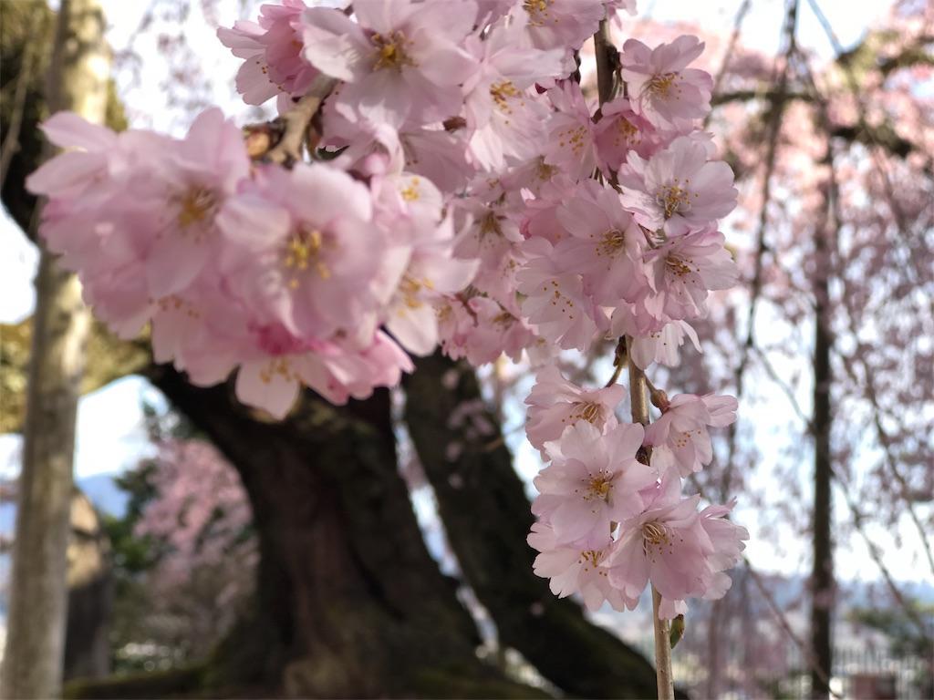 f:id:mika-shimosawa:20170412192719j:image