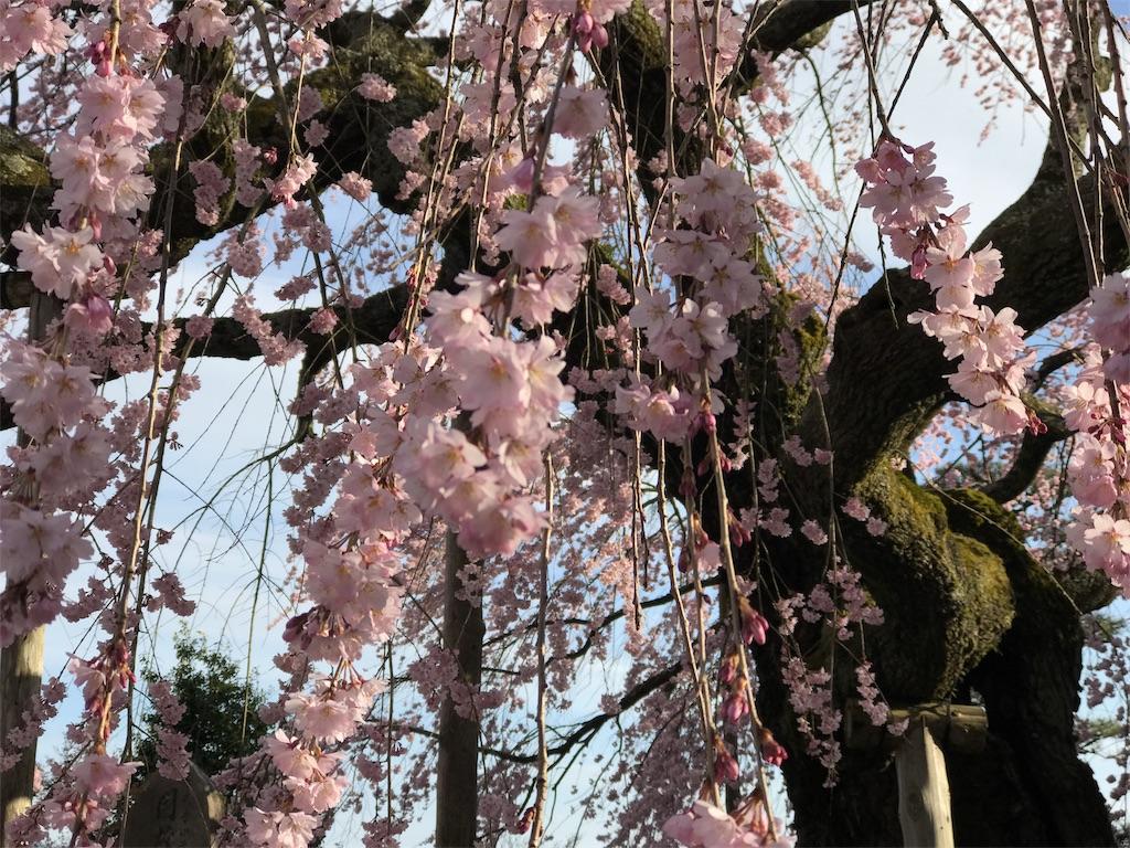 f:id:mika-shimosawa:20170412192722j:image