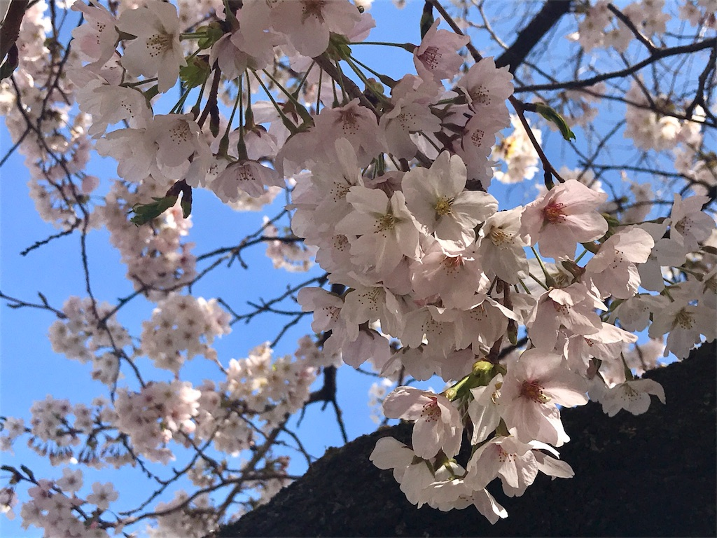 f:id:mika-shimosawa:20170418162553j:image