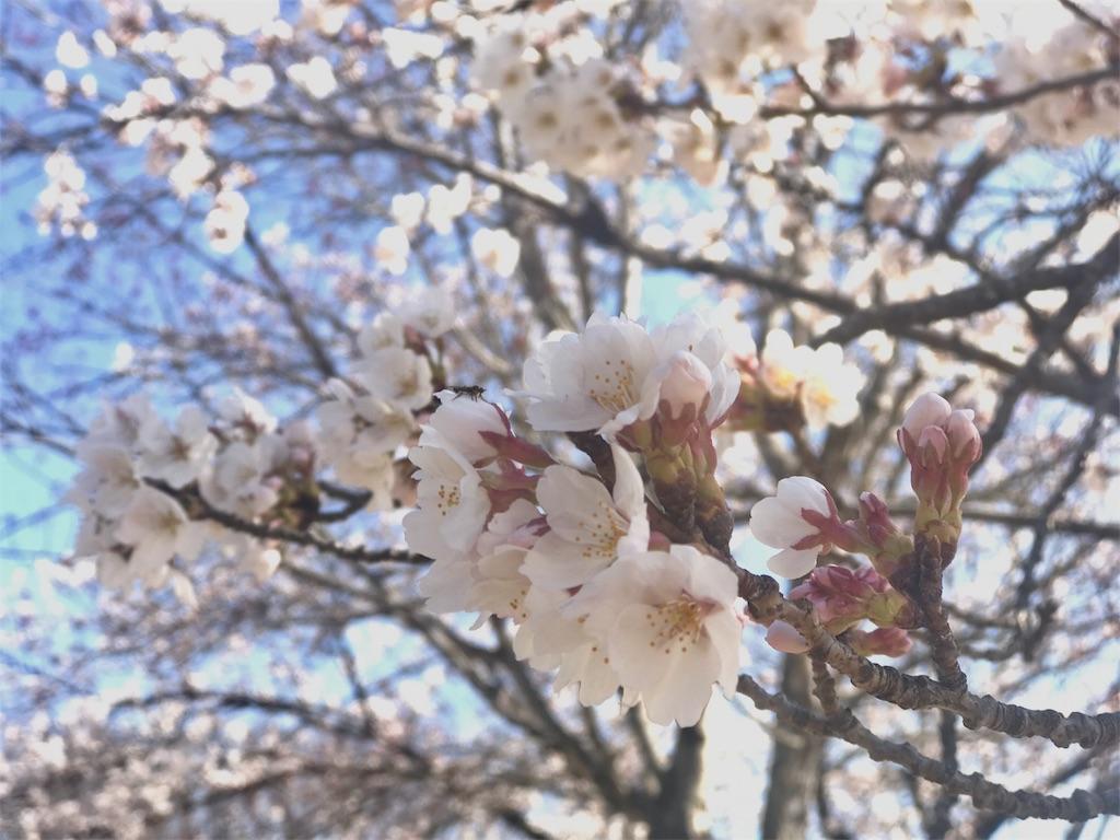 f:id:mika-shimosawa:20170418162645j:image