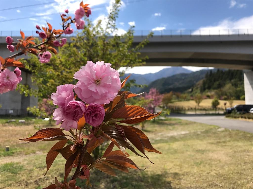 f:id:mika-shimosawa:20170506154733j:image