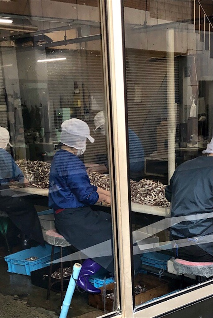 野中かまぼこの手押しじゃこ天を作るためにホタルジャコを処理する女性