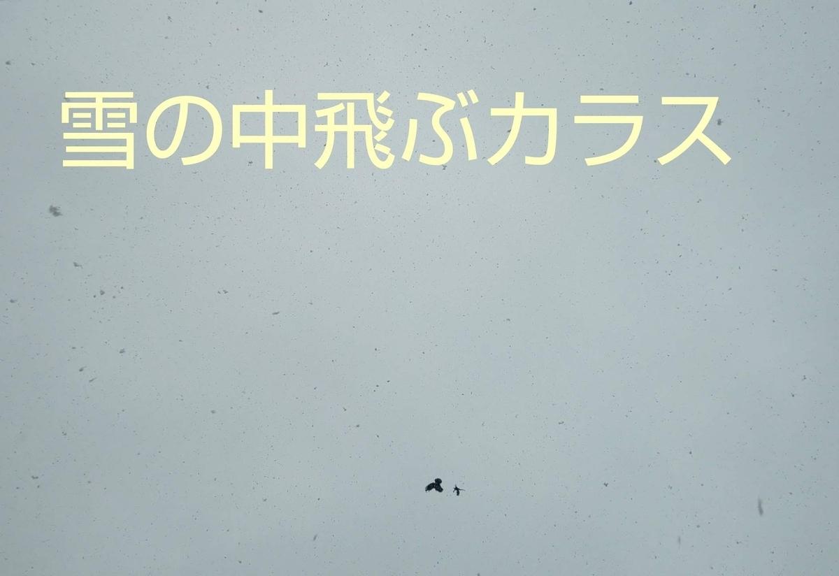 f:id:mikan-iro:20200329135036j:plain