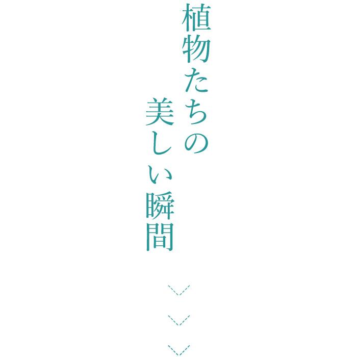 f:id:mikata-uranai:20170824153656j:plain
