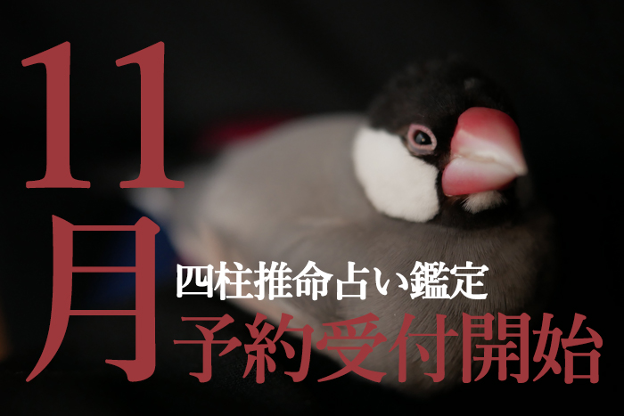 11月鑑定予約受付開始!