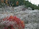 f:id:mikawakinta63:19990112180026j:image