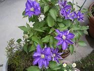 f:id:mikawakinta63:20060506103052j:image