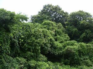 f:id:mikawakinta63:20060708145849j:image
