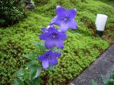 f:id:mikawakinta63:20060710193555j:image