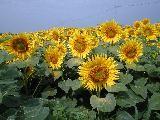 f:id:mikawakinta63:20060721152333j:image
