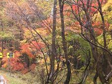 f:id:mikawakinta63:20061111131551j:image