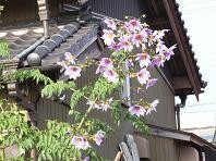 f:id:mikawakinta63:20061116141359j:image
