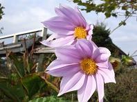 f:id:mikawakinta63:20061116141558j:image