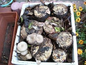 f:id:mikawakinta63:20061117155520j:image