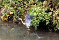 f:id:mikawakinta63:20061126204903j:image