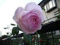 f:id:mikawakinta63:20061225162054j:image