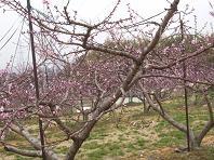 f:id:mikawakinta63:20070327102506j:image