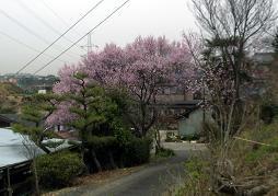 f:id:mikawakinta63:20070327103639j:image