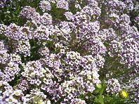 f:id:mikawakinta63:20070328123502j:image
