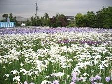 f:id:mikawakinta63:20070609130241j:image