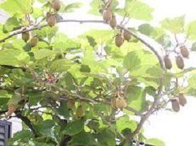 f:id:mikawakinta63:20070613113502j:image:right