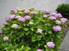 f:id:mikawakinta63:20070615115706j:image:left