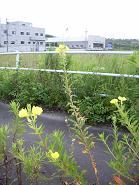 f:id:mikawakinta63:20070701053903j:image:right