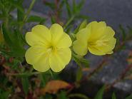 f:id:mikawakinta63:20070701054214j:image:right