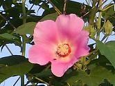 f:id:mikawakinta63:20070905061934j:image