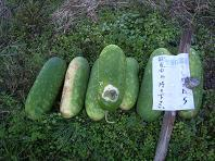 f:id:mikawakinta63:20071206085155j:image
