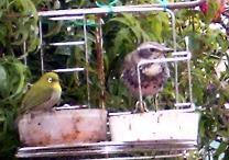 f:id:mikawakinta63:20080202124616j:image:left