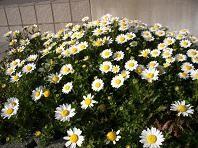 f:id:mikawakinta63:20080311161101j:image