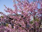 f:id:mikawakinta63:20080322092642j:image