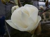 f:id:mikawakinta63:20080323113625j:image