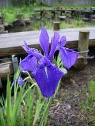 f:id:mikawakinta63:20080505110014j:image