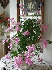 f:id:mikawakinta63:20080512134531j:image