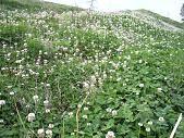f:id:mikawakinta63:20080513065310j:image