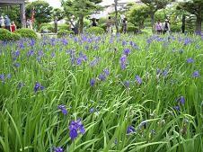 f:id:mikawakinta63:20080520113453j:image