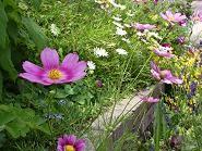 f:id:mikawakinta63:20080525131105j:image
