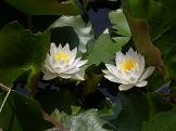 f:id:mikawakinta63:20080610104321j:image