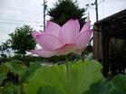 f:id:mikawakinta63:20080718063238j:image