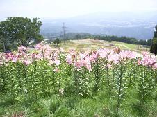 f:id:mikawakinta63:20080724103200j:image